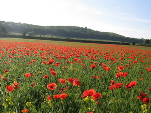 Wye's poignant reminder of Flanders' red poppies